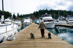 WomanWoman walks her two dogs on dock of harbor. A senior woman walks her two dogs between several boats moored at the dock in a harbor Royalty Free Stock Photos