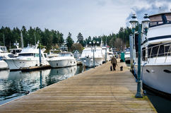 Woman walks her two dogs on dock of harbor. A senior woman walks her two dogs between several boats moored at the dock of the marina at Roche Harbor on San Juan Royalty Free Stock Photography