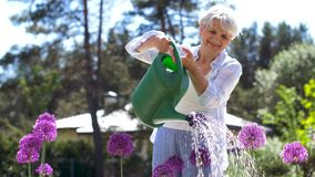 Senior woman watering flowers at summer garden stock video