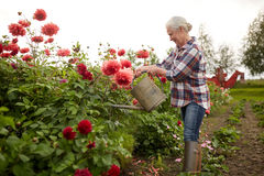 Senior woman watering flowers at summer garden Royalty Free Stock Images