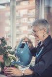 Senior woman watering home plant Royalty Free Stock Photos