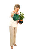 Senior woman watering plant. Stock Photo