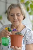 Senior woman watering plant Royalty Free Stock Photos