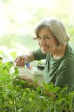 Senior woman watering plant Stock Photography