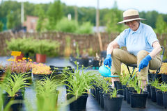 Senior Woman Watering Plants in Garden Stock Photography