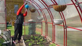 Senior Woman Watering Plants in the Greenhouse. Senior Woman Watering Potted Plants in the Greenhouse in Slow Motion. Female Gardener Taking Care of Plants stock video