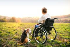 A senior woman in wheelchair with dog in autumn nature. Stock Images