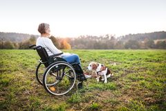 A senior woman in wheelchair with dog in autumn nature. Royalty Free Stock Photography