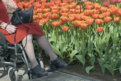 Senior woman in wheelchair at flower bed Stock Photo