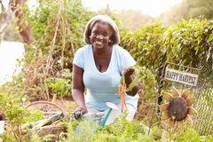 Senior Woman Working On Allotment Stock Photos