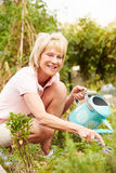 Senior Woman Working On Allotment Royalty Free Stock Images