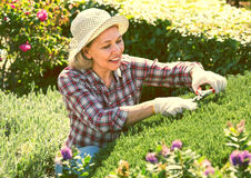 Senior woman working in the garden Stock Images