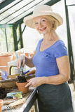 Senior woman working in greenhouse. Potting a plant royalty free stock photo