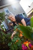 Senior women gardening Stock Image