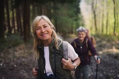 Free Senior Women Hikers Outdoors Walking In Forest In Nature, Looking At Camera. Stock Photos - 221184203