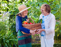 Senior Women Holding a Basket of Fresh Vegetables Stock Photo
