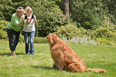 Senior Women learning to use Camera Phones. Two over 65 year old women using their camera phones to take a photo of a posing golden retriever Royalty Free Stock Images