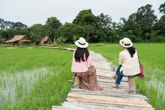 Senior women visit rice field, Thailand. Senior Asian tourist women sit on bamboo footpath surrounding by ripe rice field and wooden hut, Nakhon Nayok Province stock photography