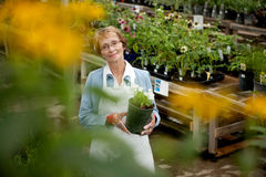Senior Worker in Garden Center Stock Photo