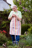 Senior works in the garden Stock Photography