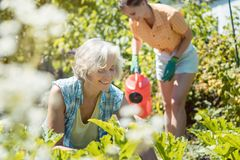 Senior and young woman gardening together royalty free stock photos