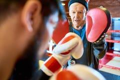 Seniora Powozowy Stażowy bokser obrazy royalty free