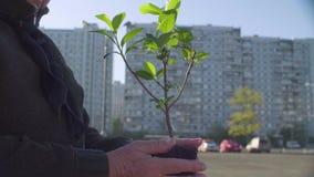Seniora wolontariusz z młodym drzewem w jej rękach w mieście zdjęcie wideo