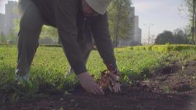 Seniora zielony aktywista zasadza kwiatu w mieście zbiory