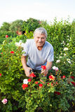 Seniors caring for roses in the garden Royalty Free Stock Photo