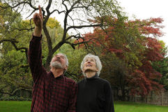 Seniors Looking Upward. Senior couple out in nature looking upward at the autumn trees in New England Royalty Free Stock Photography