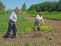 Seniors work in garden Stock Photos