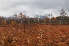Senjogahara причаливает след, сезон падения стоковые фото
