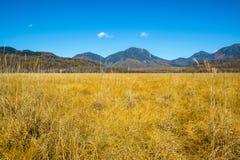 Senjogahara träsk Fotografering för Bildbyråer