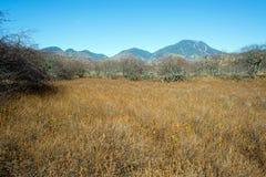 Senjogahara träsk Arkivbilder