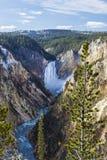 Senken Sie Fälle des Yellowstone Rivers Stockbild