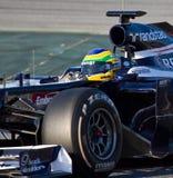 Senna de Bruno Imagens de Stock Royalty Free