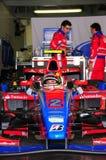 Senna di Bruno Immagine Stock