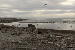 Seno Otway pinguinera i Chile Royaltyfria Foton