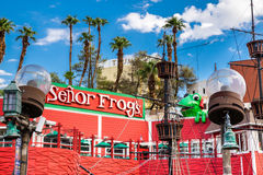 Senor żaby Las Vegas Nevada Obraz Stock