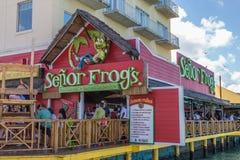Senor żaba restauracja Zdjęcia Royalty Free