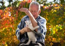 Little cat biting senior man`s hand. Senor man playing with young white cat in garden. Playful baby animal biting man`s hand and scratching his wrinkled skin stock images