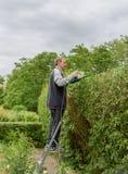 Senor sistema la siepe di arbusti nel giardino Concetto il mio giardino fotografia stock libera da diritti