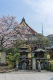 SensÅ- - ji Tempel in Asakusa im Frühjahr stockbilder