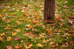 Sens jesień Zdjęcie Stock