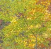 Sensación del otoño Imagen de archivo libre de regalías