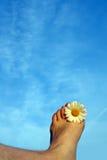 Sensación del verano Imagen de archivo libre de regalías
