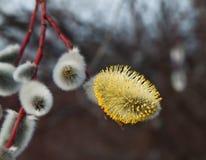 Sensaciones de la primavera Imagenes de archivo