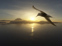 A sense of freedom. Close-up of seabird against the water landscape and setting sun Stock Image