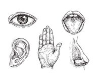 Sense organs. Hand drawn mouth and tongue, eye, nose, ear and hand palm. Engraving five senses vector illustration. Hear and sense, taste and see, listening stock illustration
