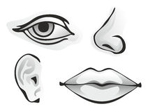 Sense organs. Monochrome illustration of different human sense organs vector illustration